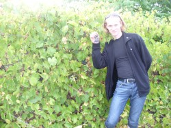 Дикий виноградник